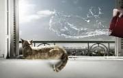 猫 创意动物PS壁纸 创意无限趣味动物篇 插画壁纸