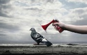 鸽子 创意动物PS壁纸 创意无限趣味动物篇 插画壁纸