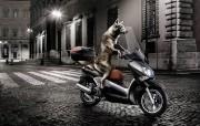 狼骑摩托 动物主题创意设计 创意无限趣味动物篇 插画壁纸