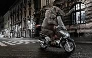 大象骑摩托 创意动物PS壁纸 创意无限趣味动物篇 插画壁纸