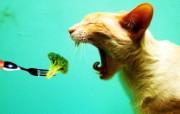猫 动物主题创意设计 创意无限趣味动物篇 插画壁纸