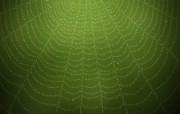 蜘蛛网的露珠 Vladstudio 设计壁纸 高清晰Vladstudio 壁纸 二创意可爱插画篇 插画壁纸