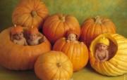 Anne Geddes 可爱婴儿壁纸 创意壁纸