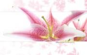 创意飞跃之植物篇 创意壁纸