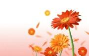 花的世界!艺术花朵精选壁纸 创意壁纸