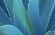 蓝色静谧主题系列壁纸 创意壁纸