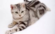 1600猫咪写真 动物壁纸