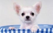 1600小狗写真 18 18 1600小狗写真 动物壁纸