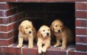 1600小狗写真 18 17 1600小狗写真 动物壁纸