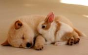1600小狗写真 18 16 1600小狗写真 动物壁纸