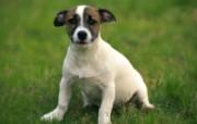 1600小狗写真 18 15 1600小狗写真 动物壁纸