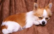 1600小狗写真 18 14 1600小狗写真 动物壁纸