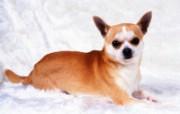 1600小狗写真 18 13 1600小狗写真 动物壁纸