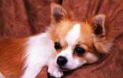 1600小狗写真 18 12 1600小狗写真 动物壁纸