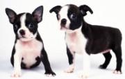 1600小狗写真 18 10 1600小狗写真 动物壁纸