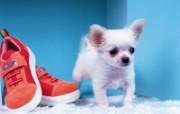 1600小狗写真 18 9 1600小狗写真 动物壁纸