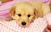 1600小狗写真 19 19 1600小狗写真 动物壁纸