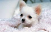 1600小狗写真 19 18 1600小狗写真 动物壁纸