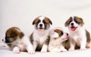 1600小狗写真 19 17 1600小狗写真 动物壁纸