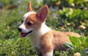 1600小狗写真 19 15 1600小狗写真 动物壁纸