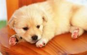 1600小狗写真 19 14 1600小狗写真 动物壁纸