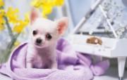 1600小狗写真 19 13 1600小狗写真 动物壁纸