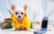 1600小狗写真 19 11 1600小狗写真 动物壁纸