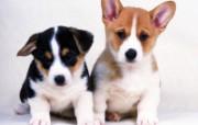 1600小狗写真 19 10 1600小狗写真 动物壁纸
