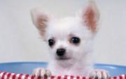 1600小狗写真 19 8 1600小狗写真 动物壁纸