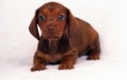 1600小狗写真 19 6 1600小狗写真 动物壁纸