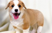 1600小狗写真 19 5 1600小狗写真 动物壁纸