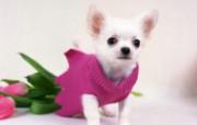 1600小狗写真 19 4 1600小狗写真 动物壁纸