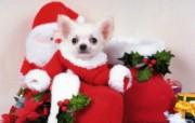 1600小狗写真 19 3 1600小狗写真 动物壁纸