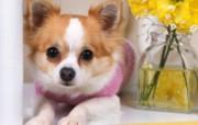 1600小狗写真 19 2 1600小狗写真 动物壁纸