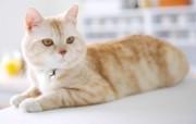 1920猫咪写真 动物壁纸