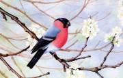 爱不释手!精致的手绘飞禽壁纸 动物壁纸