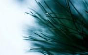 暗调植物单反高清摄影壁纸 壁纸3 暗调植物单反高清摄影 动物壁纸