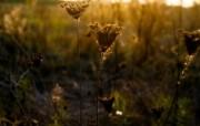 暗调植物单反高清摄影壁纸 壁纸9 暗调植物单反高清摄影 动物壁纸