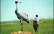 澳洲鸟类壁纸 动物壁纸