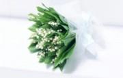 白色花朵(高清160 动物壁纸