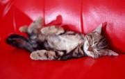 宝贝小家猫壁纸 动物壁纸