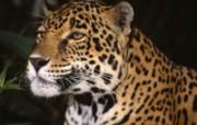 八月Webshots动物系列壁纸 动物壁纸