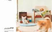 壁纸:家有可爱小宠物 动物壁纸