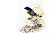 彩绘鸟类壁纸 动物壁纸