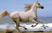草原上的骏马 动物壁纸