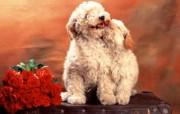 超大高清晰宽屏小狗写真壁纸 动物壁纸