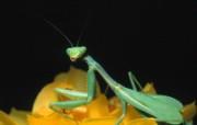 超高清晰昆虫写真壁纸 动物壁纸