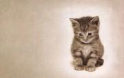 超可爱得意小猫壁纸 动物壁纸