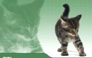 超可爱动物壁纸 动物壁纸