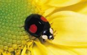 虫虫的世界 动物壁纸